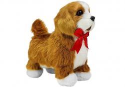 Pies Cavalier Spaniel Porusza się, Szczeka